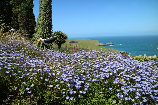 Garden By The Bay Meadow garden and the bays - picture of fishermans bay garden, akaroa