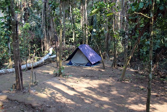 Tambopata Ecolodge: our tent in the jungle