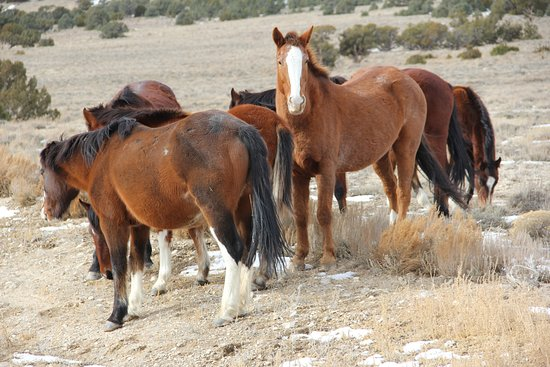 Wild Horse Safaris : The family band near Jerry's ranch