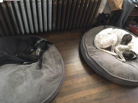 Troy, NY: Josie and Nigel