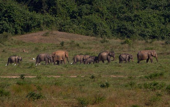 Prachuap Khiri Khan Province, Thailand: A large herd at view point # 1