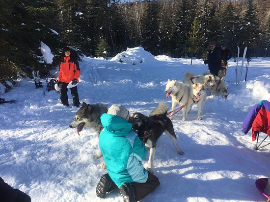 Bigfork, MT: Base Camp with dogs, sled, snowshoes, XC skis and bonfire