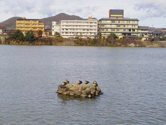 Kiso River : この鳥です。まん丸です。