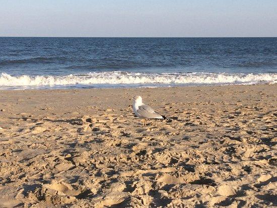 Rehoboth Beach Boardwalk: photo4.jpg
