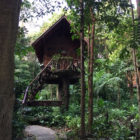Art's Riverview Jungle Lodge