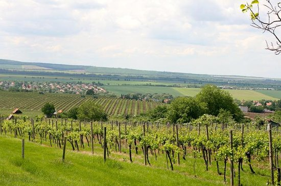 Privat vin- og sightseeingtur med...