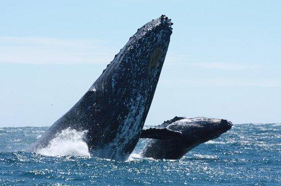 Observation des baleines à Cabo San...