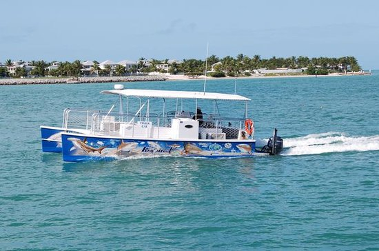 Key West Shark and Wildlife Catamaran Family-Friendly Tour