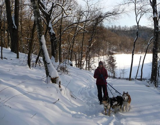 Justin Trails Resort : Snowshoeing with our Husky dogs!