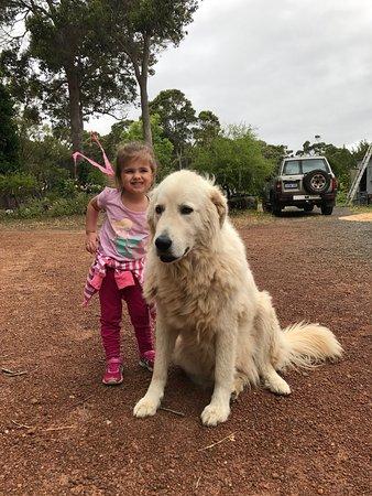 Karridale, Australia: photo0.jpg