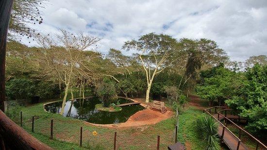 Zululand Tree Lodge: 20161217_091224_HDR_large.jpg