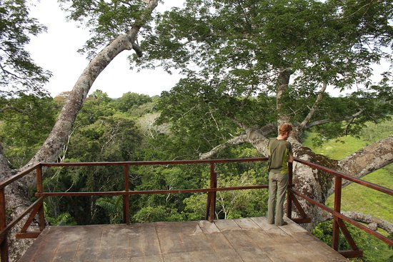 Tambo Blanquillo Canopy Tower & Canopy Tower - Picture of Tambo Blanquillo Manu National Park ...