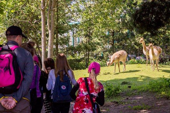 Korkeasaari Zoo