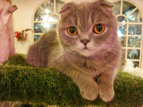 caturday cat cafe so cute