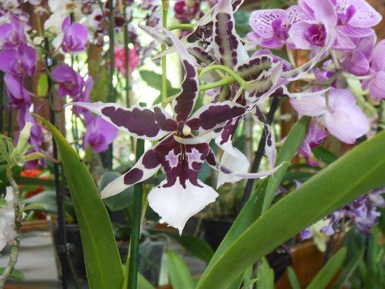 Certaines orchidées sont en vente dans la boutique - Photo de Jardin ...