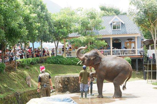 Elephant Show Picture Of Batu Secret Zoo Jawa Timur Park 2 Batu