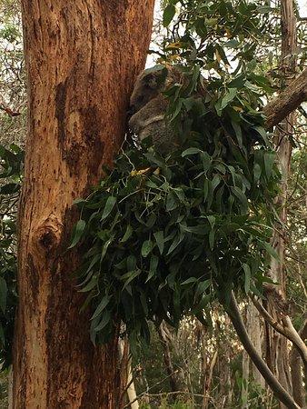 Cowes, Australia: photo3.jpg
