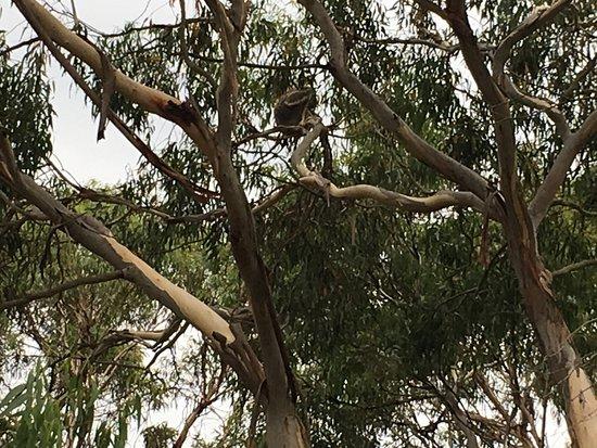 Cowes, Australia: photo4.jpg