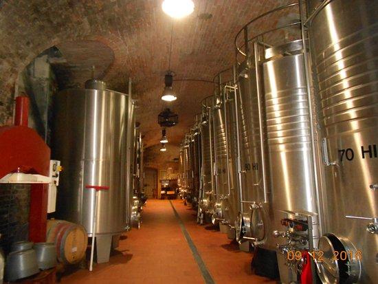San Martino Alfieri, Ιταλία: Cantina