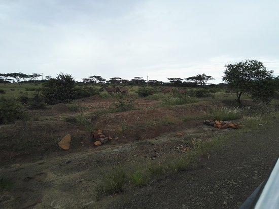 Spioenkop Nature Reserve: IMG_20161228_162904_large.jpg