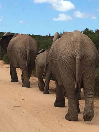 Addo, Sudáfrica: photo7.jpg