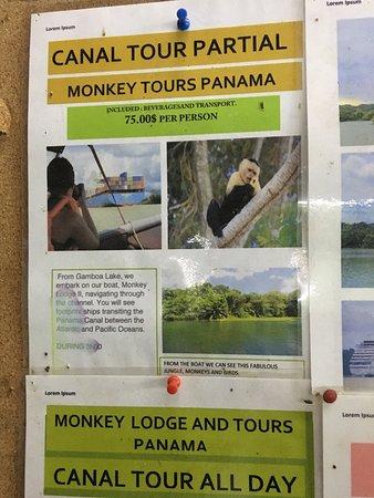 Monkey Lodge Panama : photo3.jpg