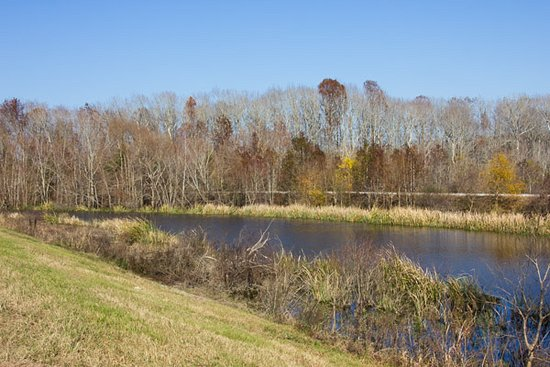 Hardeeville, SC: Visiting on a sunny day you will see many gators and cormorants along the water.