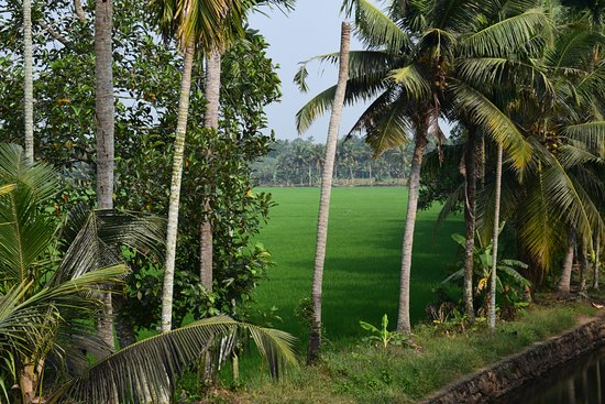 Changanacherry, India: scenery snap from one side of the serene scapes home stay