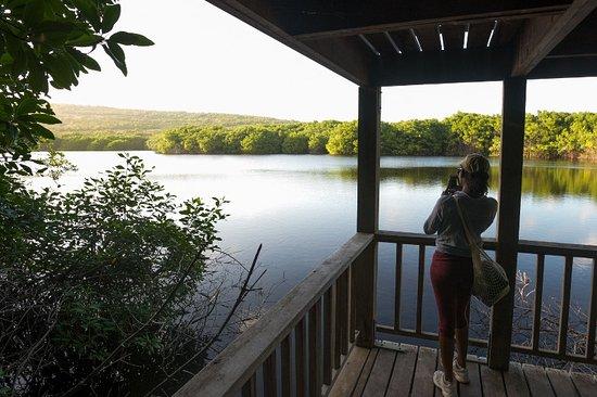 Grenada: Levera Pond, Saint Patrick