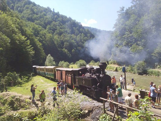Vaser Valley Forestry Railway - Day Tours: Vista del tren en una parada
