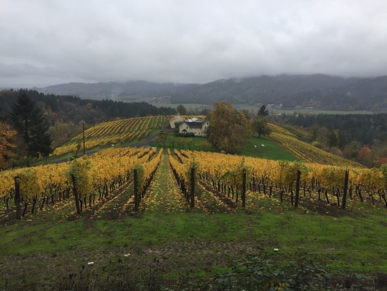 Forest Grove, Oregon: Driving up to David Hill Winery