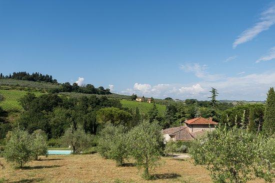 Montespertoli, Italia: Olive groves
