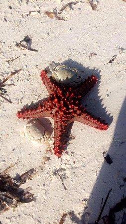 Neptune Pwani Beach Resort & Spa: Zanzibar plage de l'hôtel Neptune