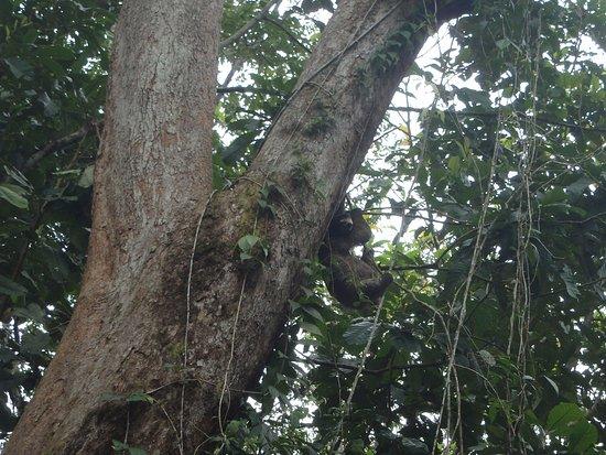 Punta Uva, Costa Rica: Nature