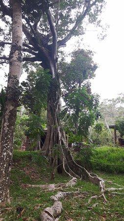 Le Mont-Dore, Nueva Caledonia: Jardín con los bungalows al fondo
