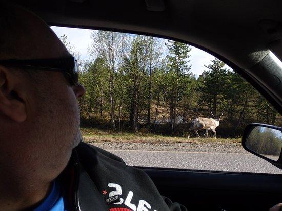 Kaamanen, Finland: Trzeba uważać podczas jazdy.