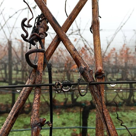 Napa Valley, CA: Dripping wet