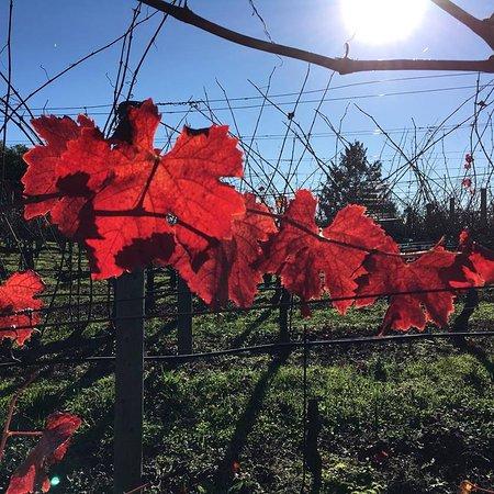 Napa Valley, Kalifornia: Hangers
