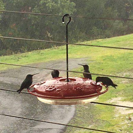 Napa Valley, CA: Hummers on a rainy day