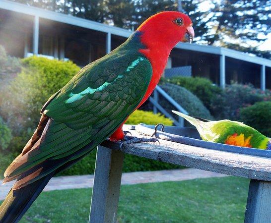 Gipsy Point, Australia: de vast dagelijks bezoekers