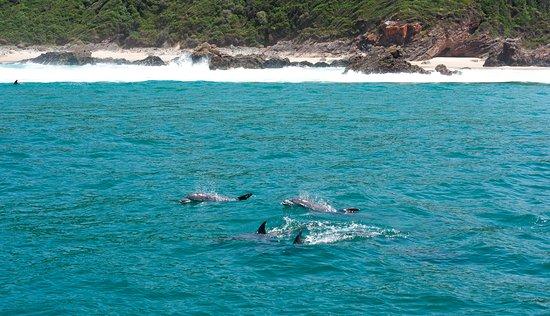 Ocean Safaris: Dolphins
