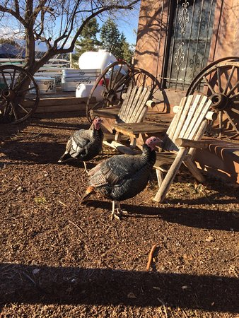 Cerrillos, Nowy Meksyk: Turkeys hanging out