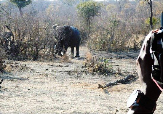 African Exodus Safaris