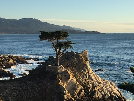 The Lone Cypress Near Sunset Time