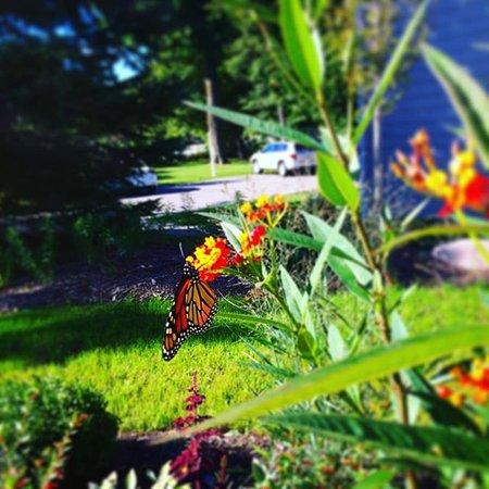 Ephraim, Wisconsin: Butterfly Garden 