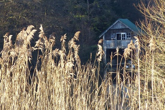 Godalming, UK: boathouse through the reeds