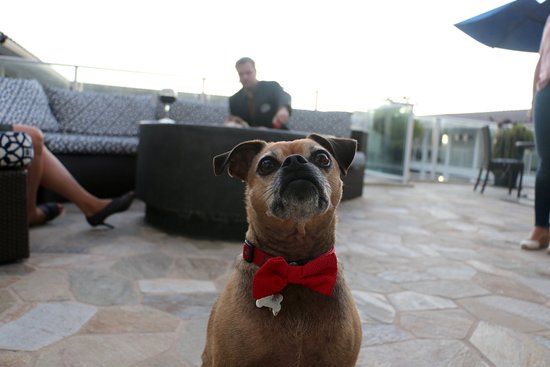 Del Mar, CA: Bring your furry friend out to lunch & enjoy a dog-friendly patio