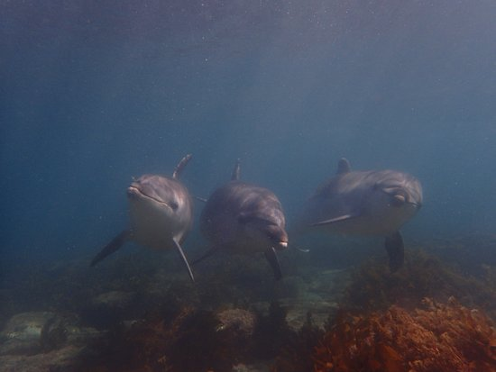 Goat Island Dive & Snorkel: lucky to have dolphins join us on a dive