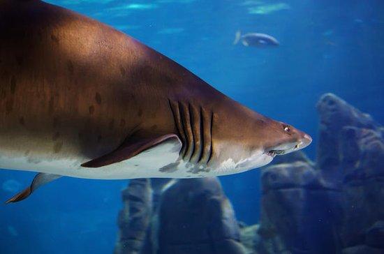 Sunshine Coast Underwater World SEA...