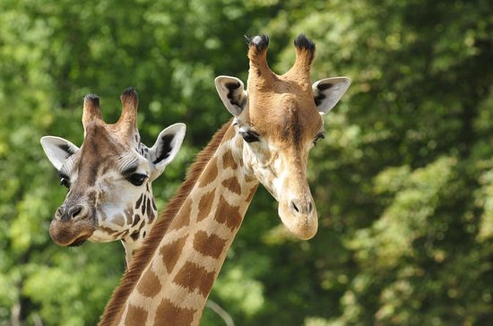 David Sheldrick Wildlife Trust and...